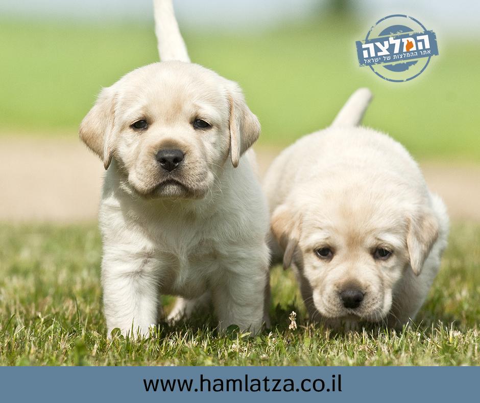 מבריק המלצות לאימוץ כלבים - מקומונט חיפה - קול חיפה חדשות מקומיות של חיפה YA-09
