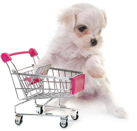 כך תבחרו חנות חיות