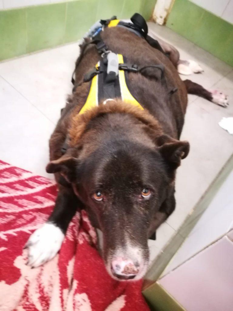 לראשונה תובעים דמי פגיעה בכלבה