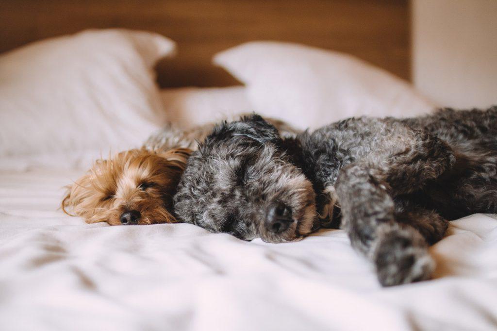 המלצות סוויס סיסטם איך אפשר לישון טוב יותר