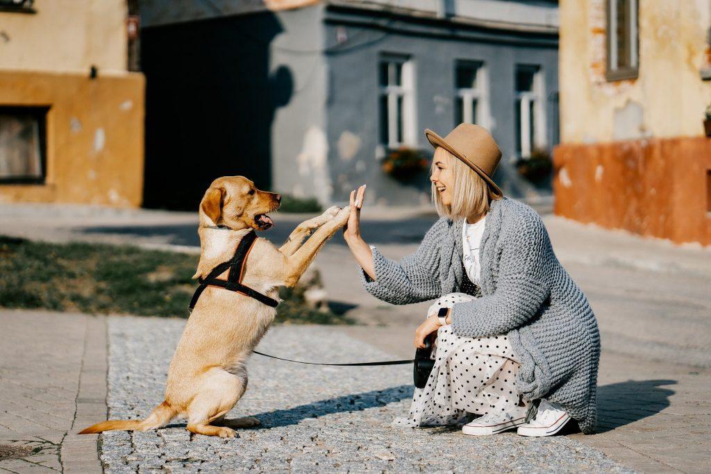 מעון רמות חיפה מאמינים כי טיפול רגשי באמצעות בעלי חיים זוהי הדרך הטובה והנכונה ביותר עבור הדיירים